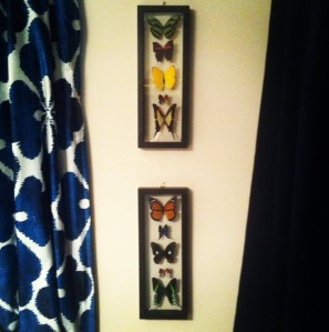 butterfly art on wall
